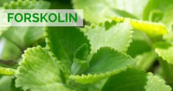 Forskolin : avis et test du brûleur de graisse