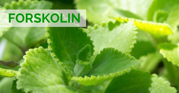 Mon avis sur Forskolin : test, prix, posologie, et effets secondaires