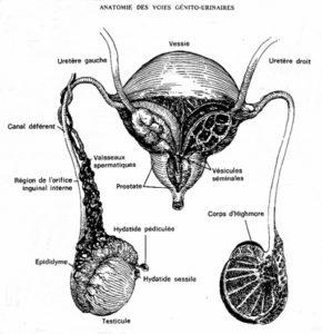 éjaculation sperme jaune