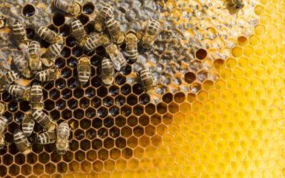 Bander grâce au miel : les abeilles offrent-elles un aphrodisiaque naturel efficace ?